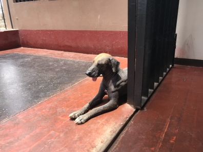 Doggy suffers from the heat and sunshine