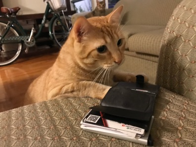 Cat tries to steal my money