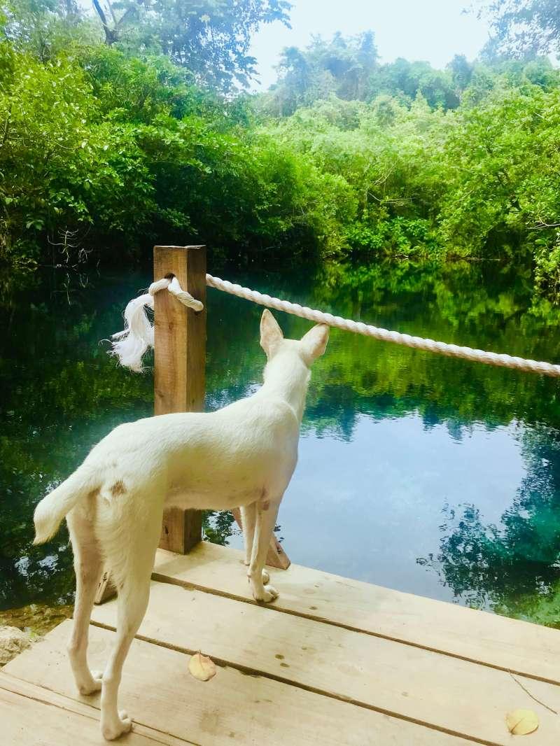 Dudú Blue Lagoon - Stray dog